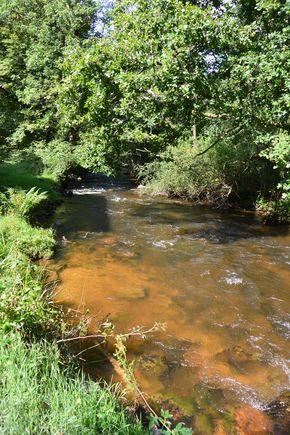 Couzon portrait rivière