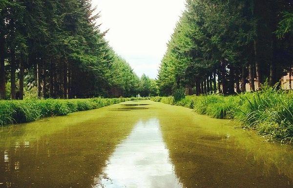 Canal de Berry aval de Montluçon (2)