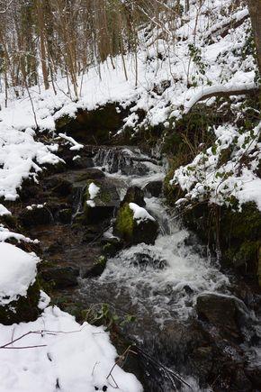 Le courdoulet l'hiver l'Etang chanat la mouteyre (3)
