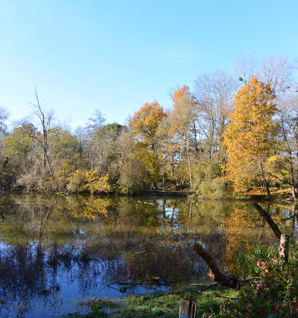 etang confluence morge allier automne
