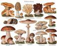 Les champignons et l'eau
