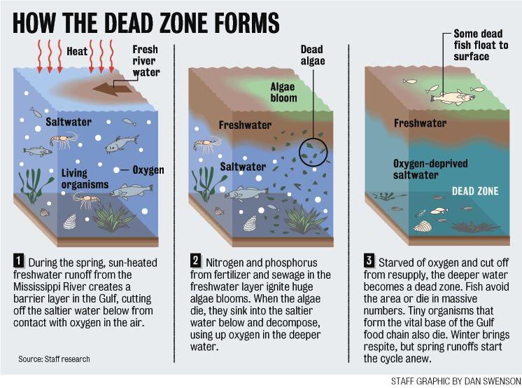 Les zones mortes des océans