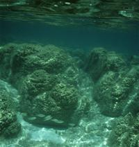 Les 1ers habitants macroscopiques des océans