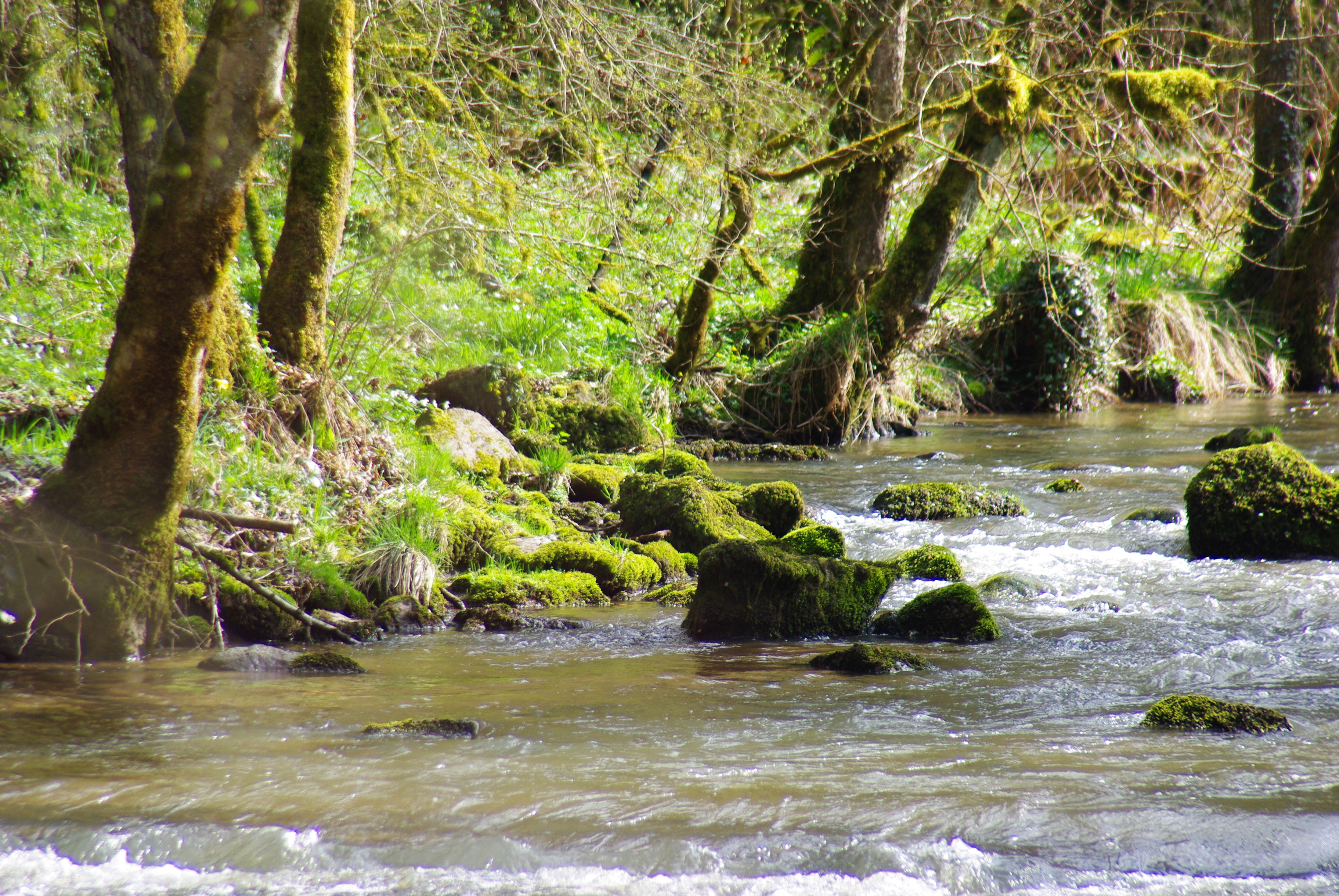 Le Miodet avant sa confluence avec la Dore