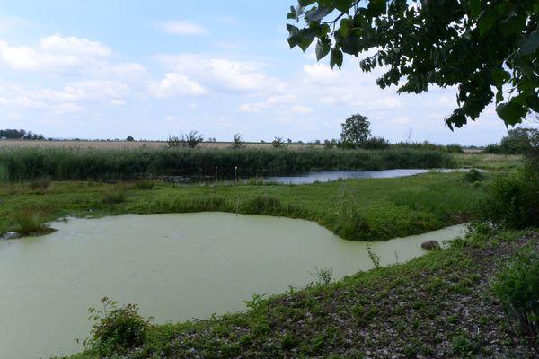 Le marais de Lambre
